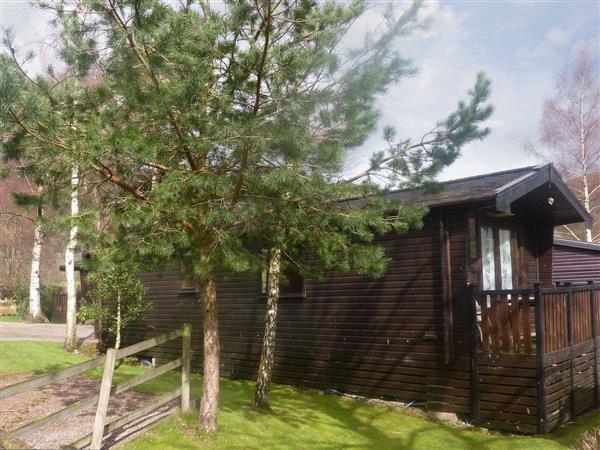 Acorn Lodge - Burnside Park in Cumbria