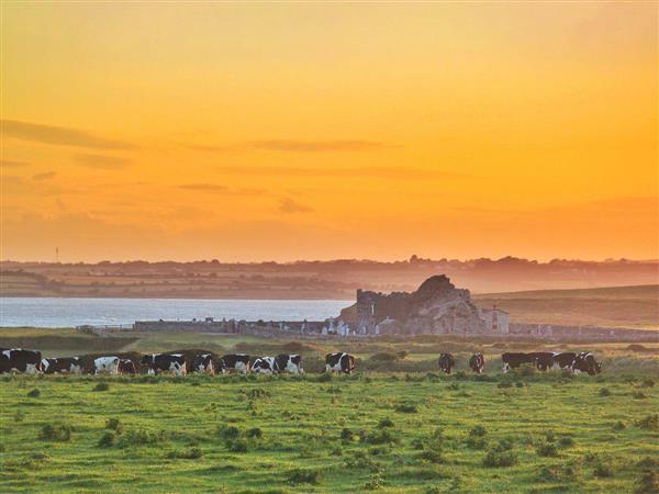 Bannow Bay Seaside Farm in Wexford