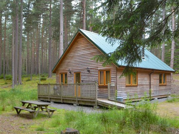 Cairngorm LodgesRed Squirrel Lodge from Cottages 4 You
