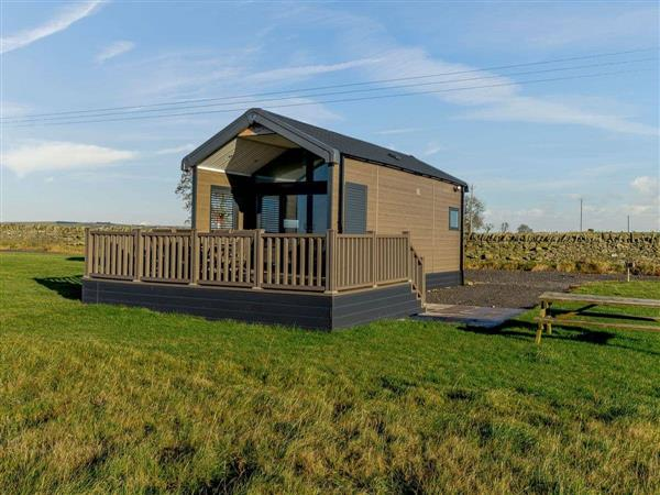 Chapman Hill Farm - Maple in Durham