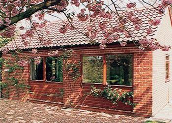 Cherry Trees in Norfolk