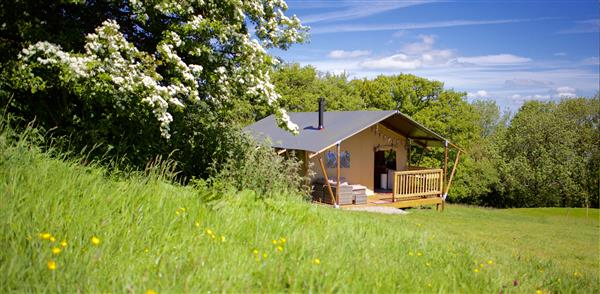 Firebug Safari Tent in Herefordshire