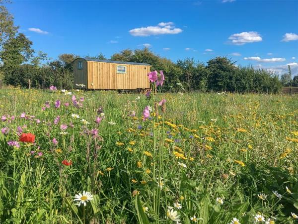Honeysuckle Holidays - Hut 3 in Monk Soham, near Woodbridge, Suffolk