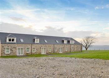 Killean Estate - Buttercup in Argyll