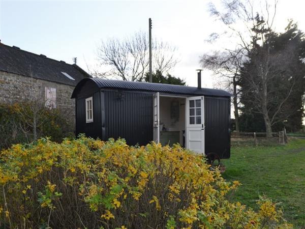 Lavender Shepherd Hut in Northumberland