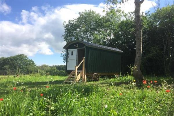 Old Green Lane Shepherds Hut in Powys