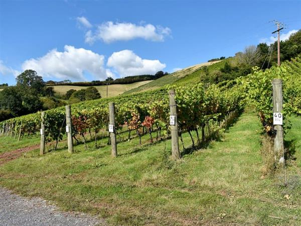 Old Walls Vineyard Lodges - Rondo in Bishopsteignton, near Teignmouth, Devon