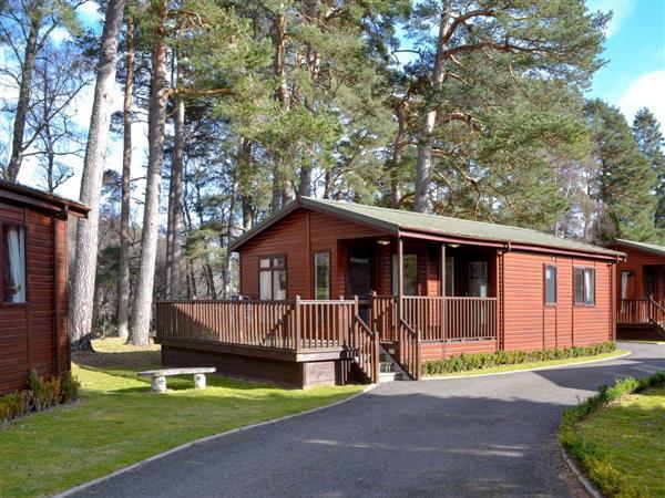 Royal Deeside Woodland Lodges- Lodge D, Dinnet, near Ballater, Aberdeenshire