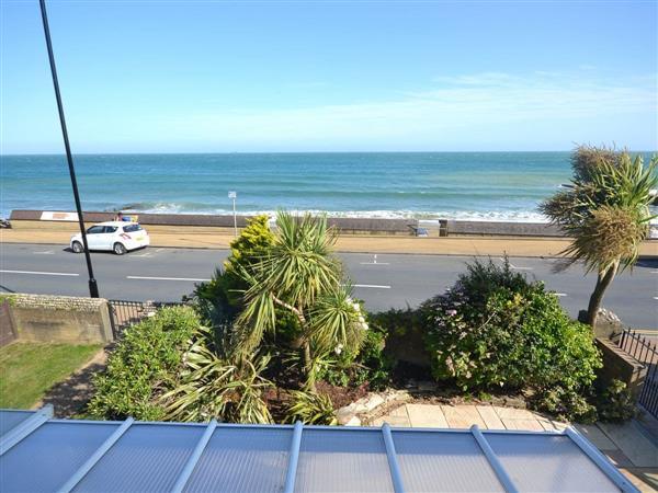 Seagulls in Isle of Wight