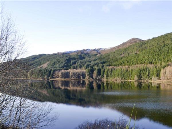 The Hollies in Ross-Shire