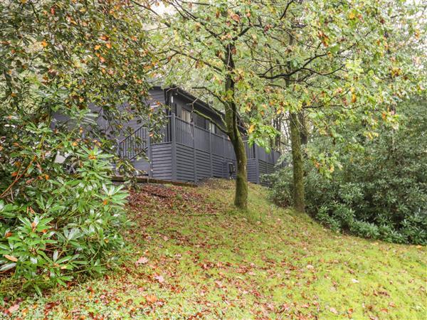 Tree Lodge,