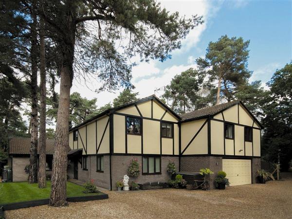 Treetop House in Dorset