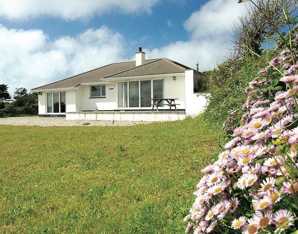 Turnstones in Cornwall