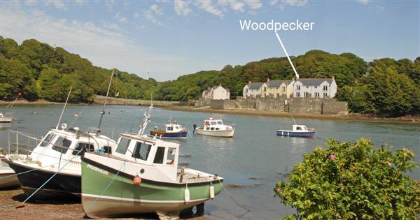 Woodpecker in Dyfed